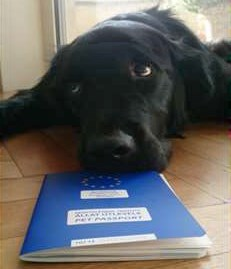 Picture of Dog with a Pet Passport